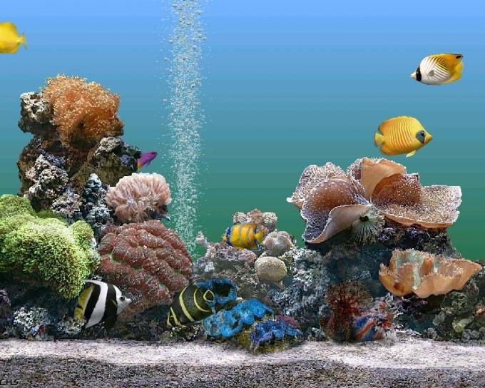 Как сделать сифон для аквариума