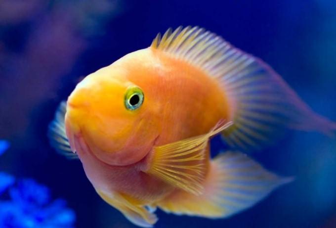 как избавится от лишней органики в аквариуме