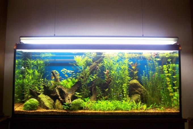 как налить воду в аквариум чтоб не повредить аквариум