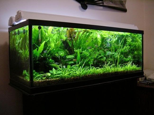 аквариум в перегородке своими руками