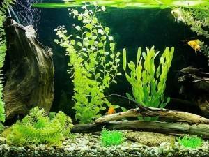 Сколько времени отстаивать воду для аквариума
