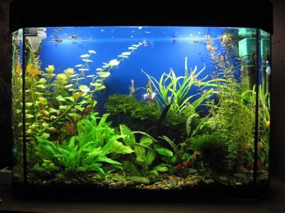как готовить воду для аквариума