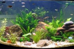 Температура в аквариуме для рыбок