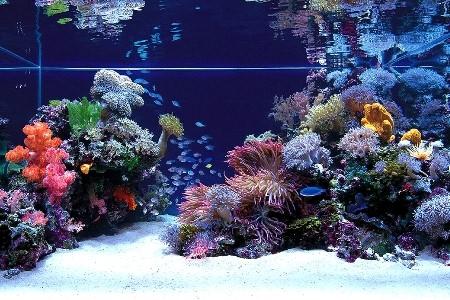 аквариум с песчаным грунтом