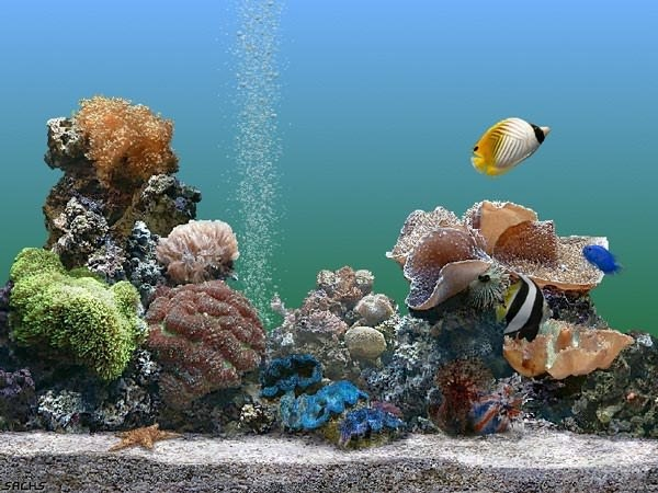 Как выбрать рыбок и аквариум при покупке