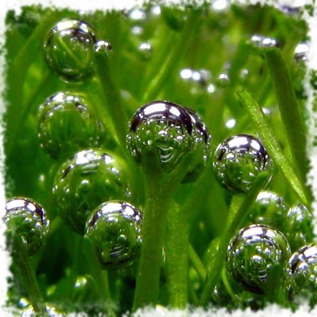 пузырьки воздуха в воде аквариума