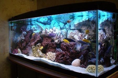 аквариум с прозрачной водой