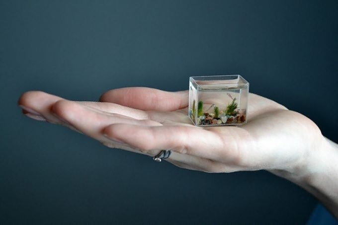 Как менять воду в маленьком аквариуме