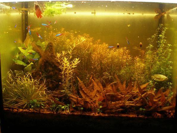 цвет аквариумной воды от торфа