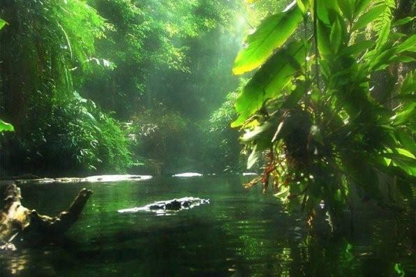 биотоп амазонки