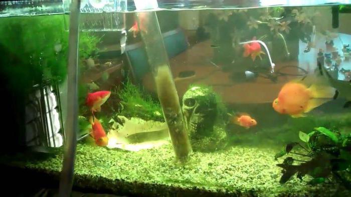 как охладить воду в аквариуме своими руками