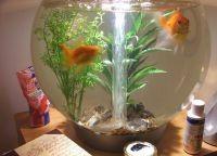 Как обустроить аквариум12