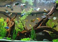 Как обустроить аквариум1