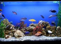 Как обустроить аквариум2