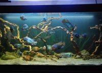 Как обустроить аквариум3