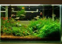 Как обустроить аквариум4