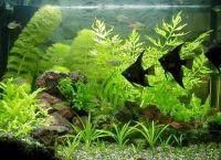 Как обустроить аквариум6