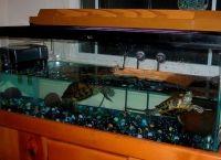 Как обустроить аквариум7