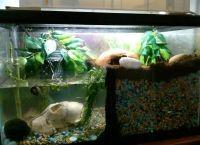 Как обустроить аквариум8