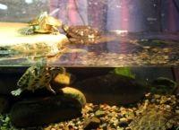 Как обустроить аквариум9