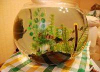 Как обустроить аквариум11