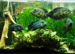 Как установить фильтр в аквариум?