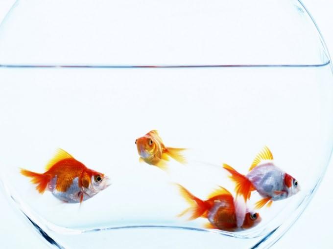 Как сделать воду в аквариуме прозрачной