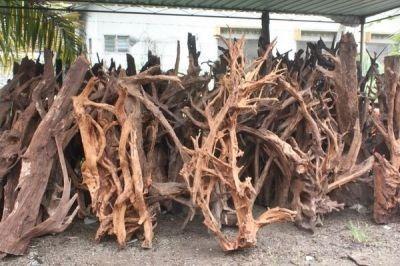 Мангровые коряги из Малайзии