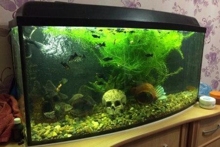 аквариум с готовой крышкой