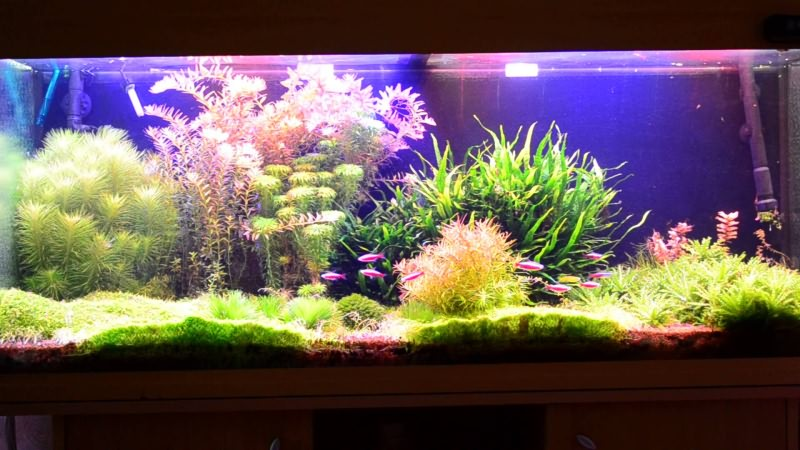 Светодиоды в аквариуме