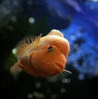 спят ли рыбы