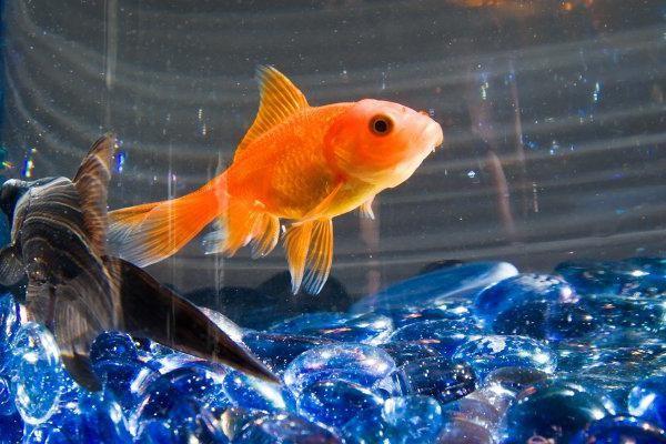 сколько спят рыбы