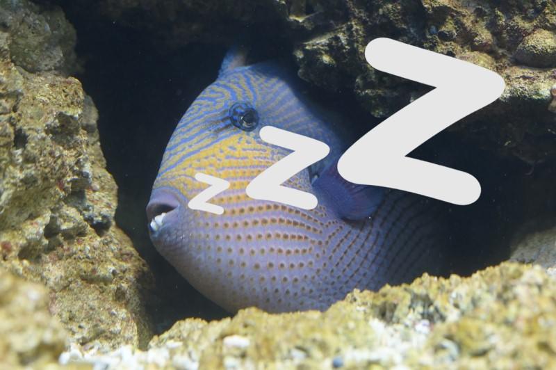рыба спит