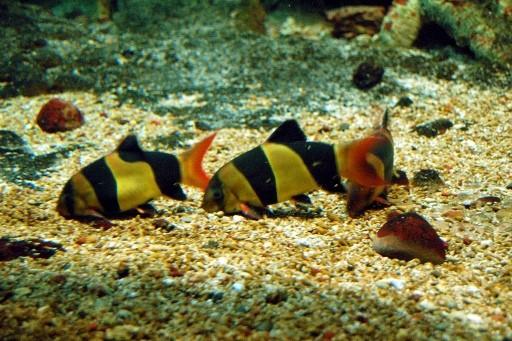 спящая рыбка