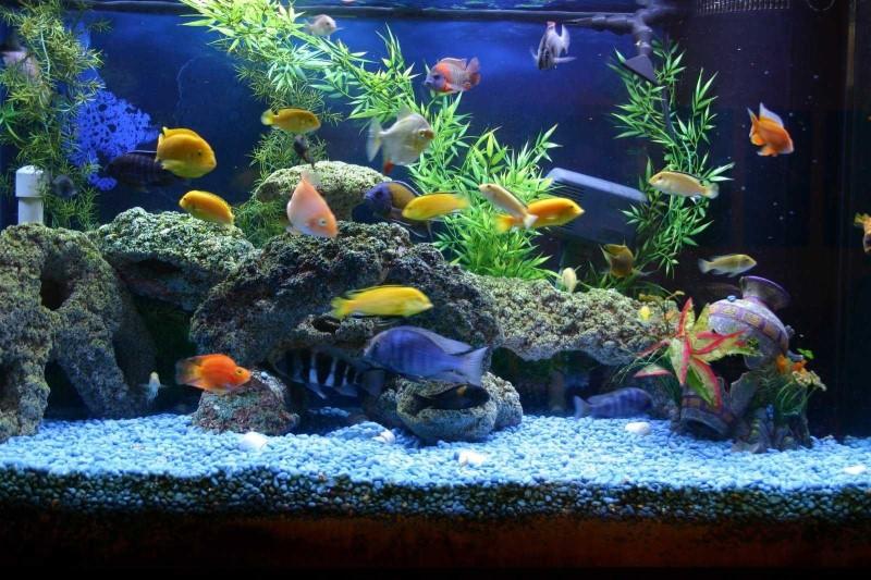 Домашние рыбки в аквариуме названия