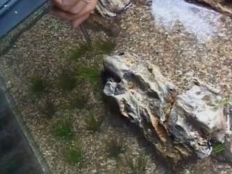 Дизайн аквариума своими руками10