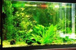 какой аквариум выбрать