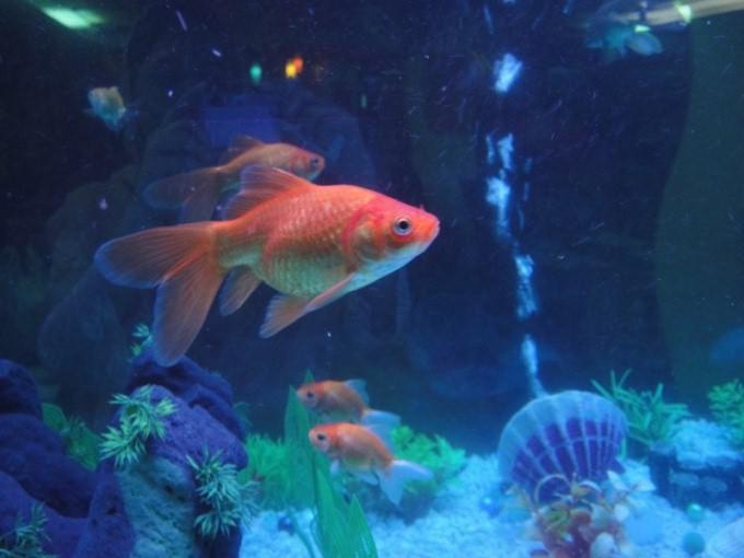 Как установить компрессор для аквариума