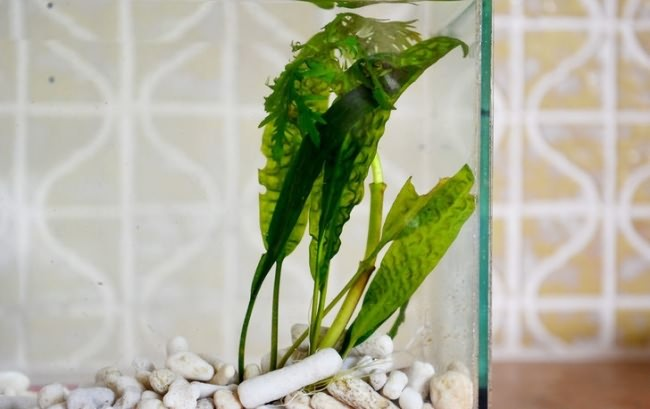 Как посадить аквариумное растение.