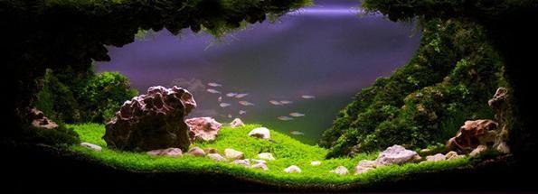 хемиантус куба акваскейп