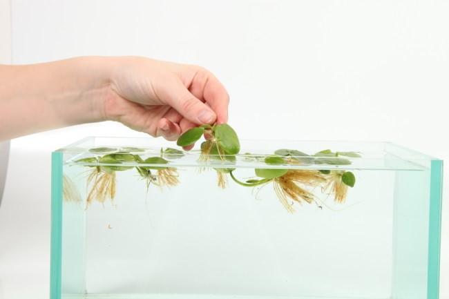 Плавающие виды растений.