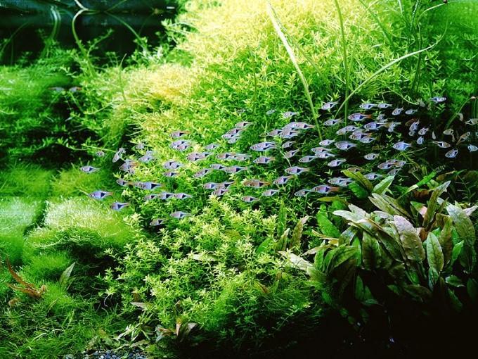 Как сажать растения в аквариуме