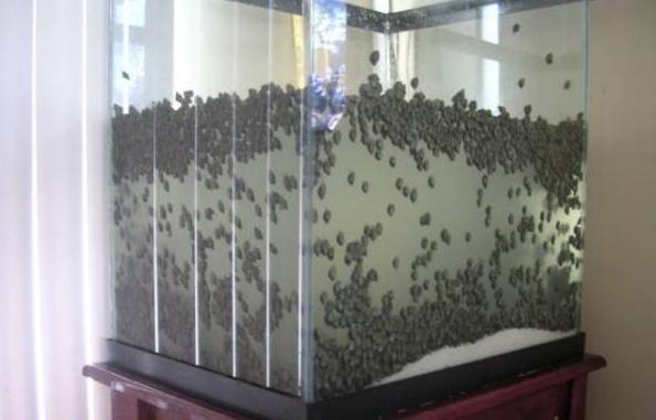 как избавиться в аквариуме от улиток