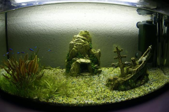 каким образом можно в аквариуме избавиться от улиток