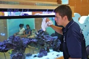 ремонт аквариума в домашних условиях