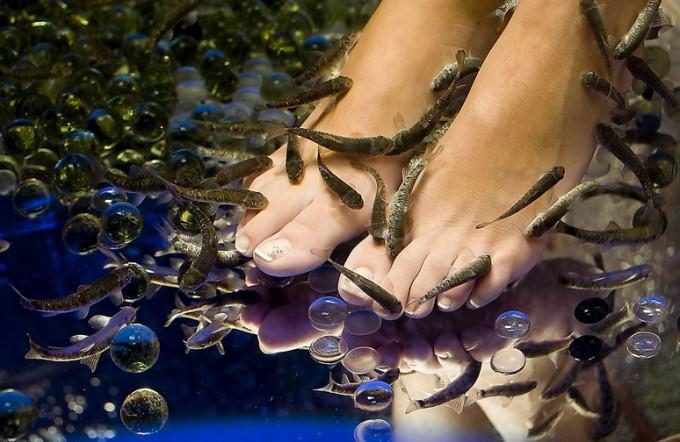 завести рыбок, которые делают массаж