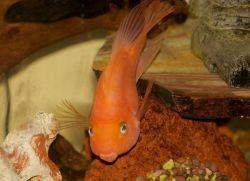 Оптимальная температура воды в аквариуме