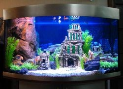 Какая температура должна быть в аквариуме1