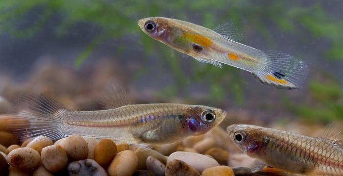 аквариумные рыбы фото