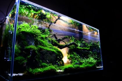 aquarium-for-sale